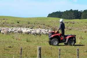 Neuseeland-Naturschutzprojekte