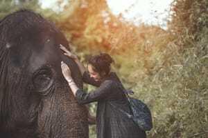 Namibia - Elefanten schützen
