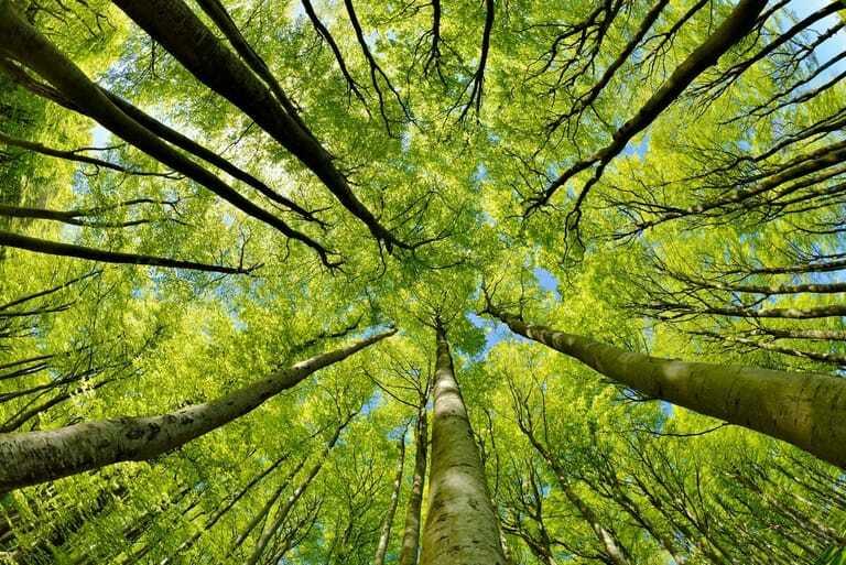 starkes Wachstum bei grünen Investments