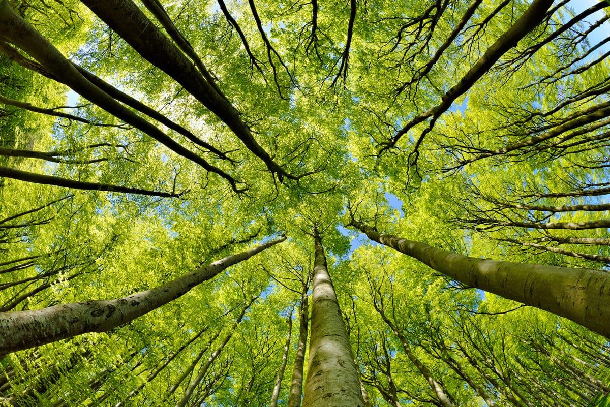 Vermögensaufbau: Rasantes Wachstum bei grünen Investments