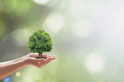 Deutsche Verbraucher achten immer mehr auf ihre Umwelt und wollen nachhaltig leben